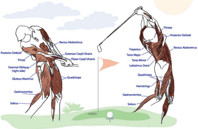 golf specific workouts